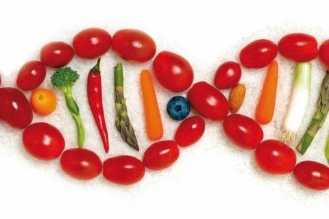 veggies 480x320